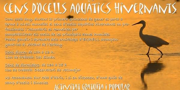 Cens d'ocells aquàtics a l'Estany d'Ivars i Vila-sana
