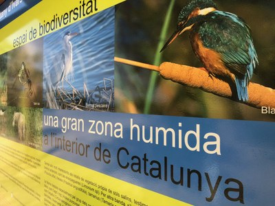 L'estany d'Ivars i Vila-sana programa activitats nocturnes a l'agost
